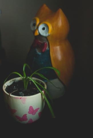 Random_bored_plant_owl-1